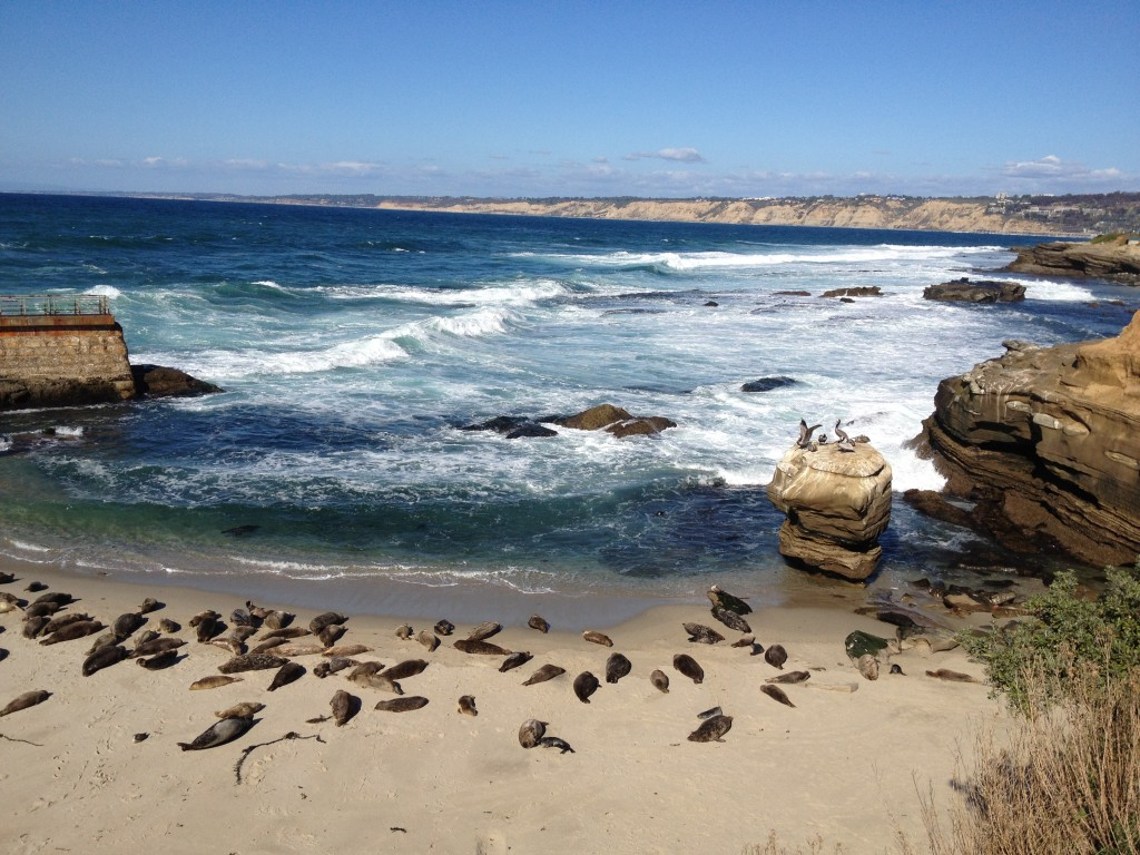 The Daydream Diaries- Best Beaches to get upclose & personal with Animals