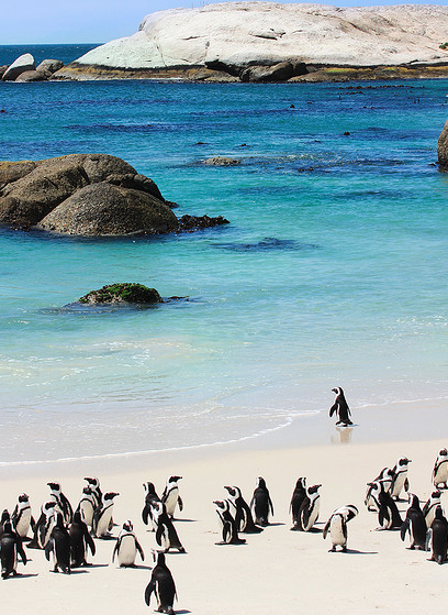 The Daydream Diaries- 5 best beaches to get upclose and personal with animals