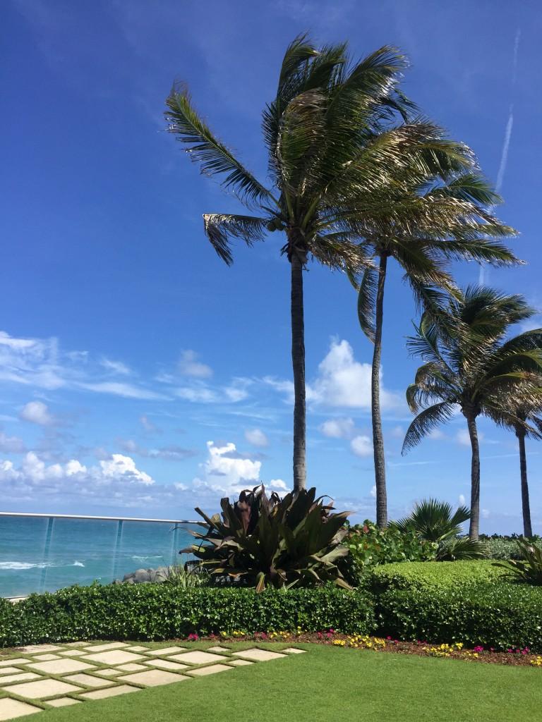 The Daydream Diaries FLorida 7